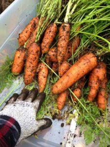 jardin-potager-de-la-confession-du-gourmet-35