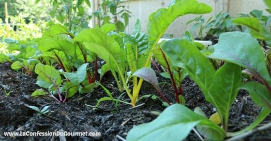 Jardin potager de la Confession du Gourmet 11