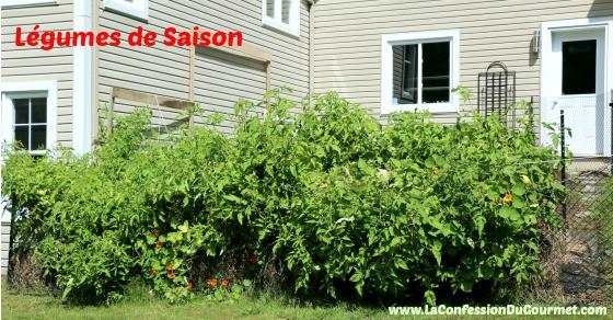 Jardin potager de la Confession du Gourmet 15